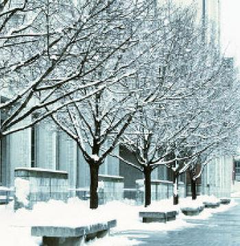 Stauffer Library in the snow